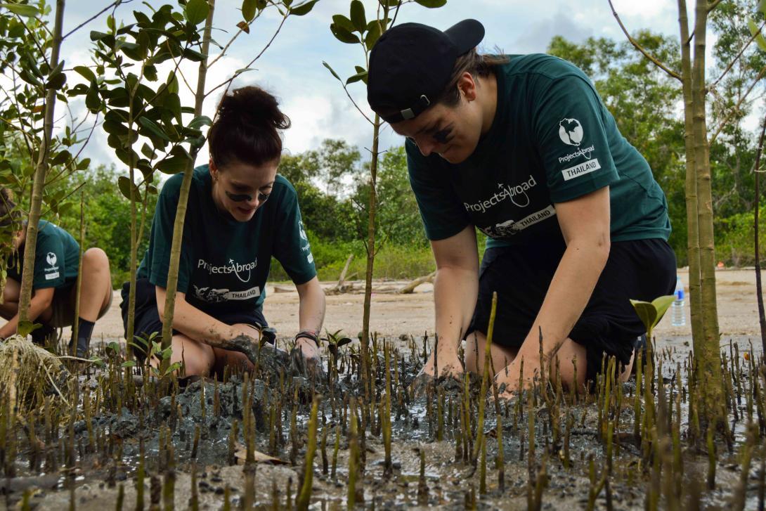 Voluntarios ambientales replantando algunos tipos de manglares en Tailandia.